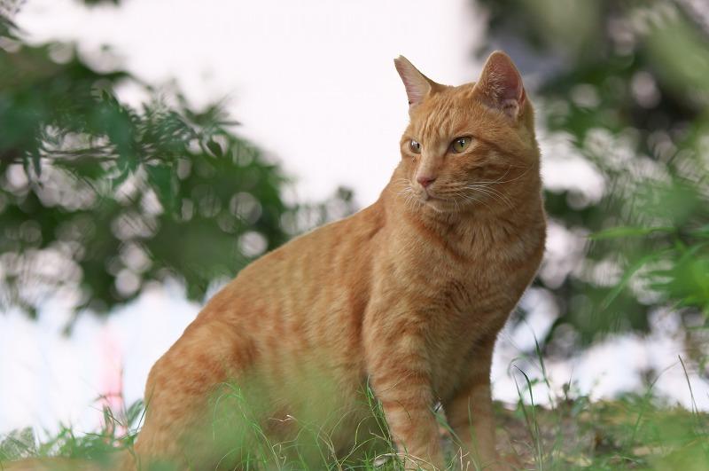 鶴見緑地 猫