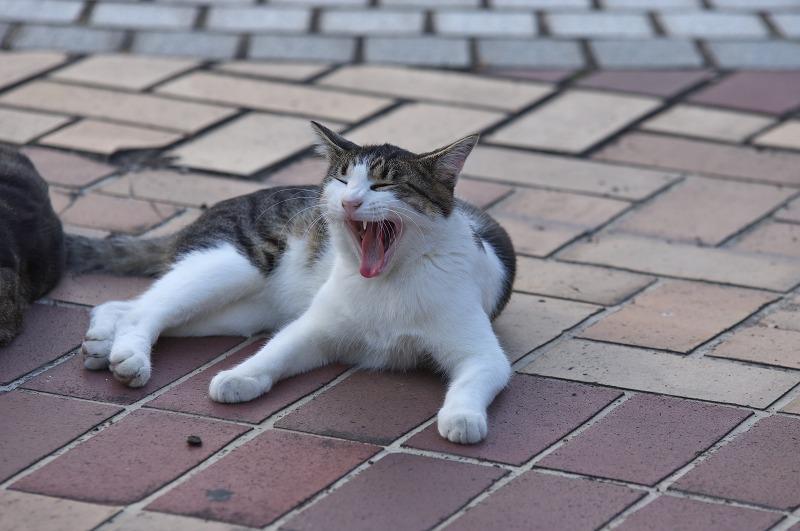 天保山観覧車前ロータリー 猫