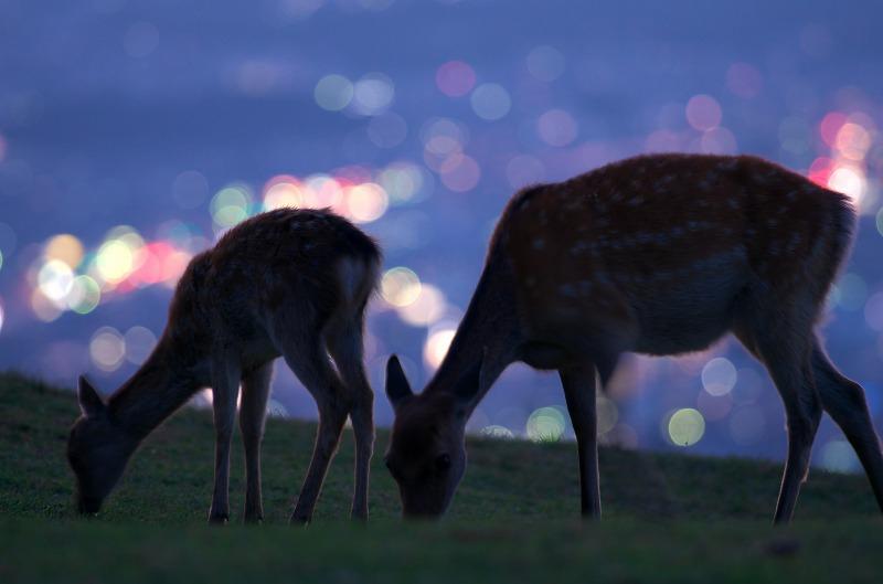 若草山の夜景と鹿シルエット