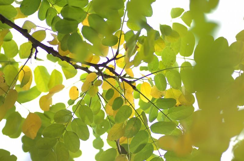 長居植物園 樹木
