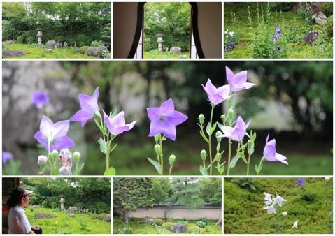 京都 東福寺 母と