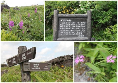 八島が原湿原2