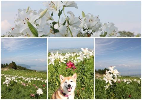 琵琶湖箱舘山2