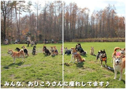 柴犬クラブアメーバオフ会 4