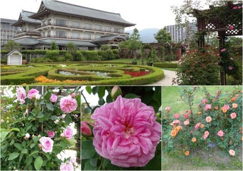 琵琶湖大津館のバラ園