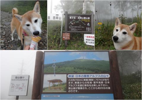 菅平牧場2