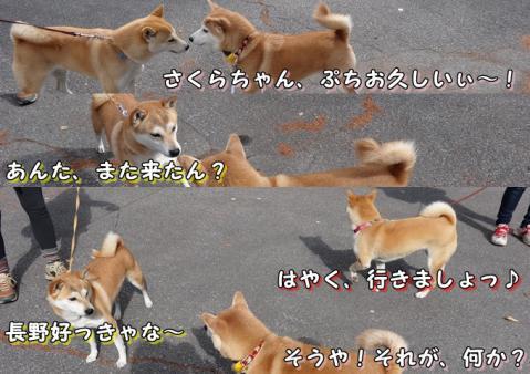 はなちゃん&さくらちゃん&日和 紅葉