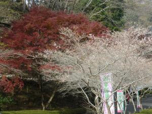 小原の桜と紅葉