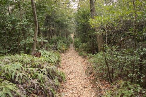 東谷山散策路景色