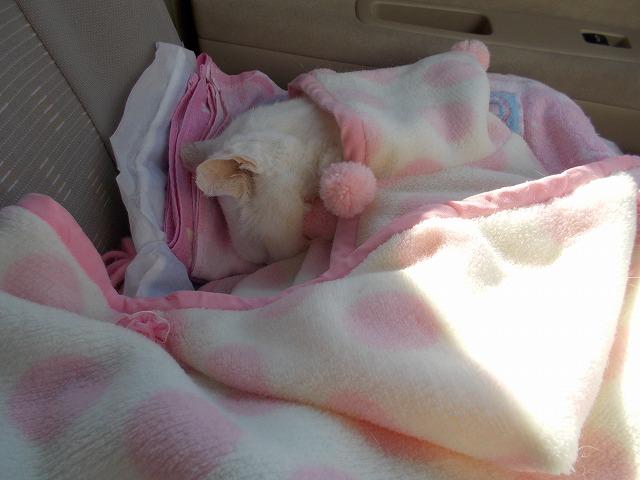 只今車中爆睡中