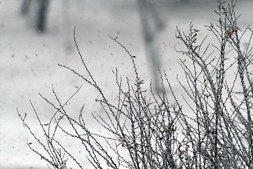 201110116snow_002.jpg