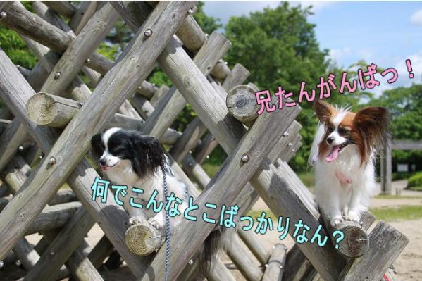 IMG_3838ya.jpg