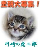 21571898image.jpg