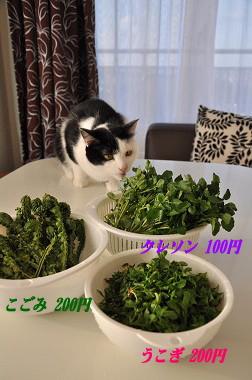 571871897198image_20100501225818.jpg