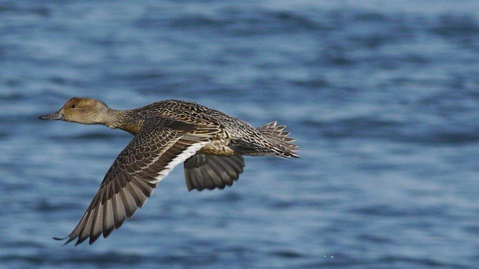 duck3_20110124170343.jpg