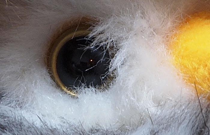 owl-oly_20101208165625.jpg
