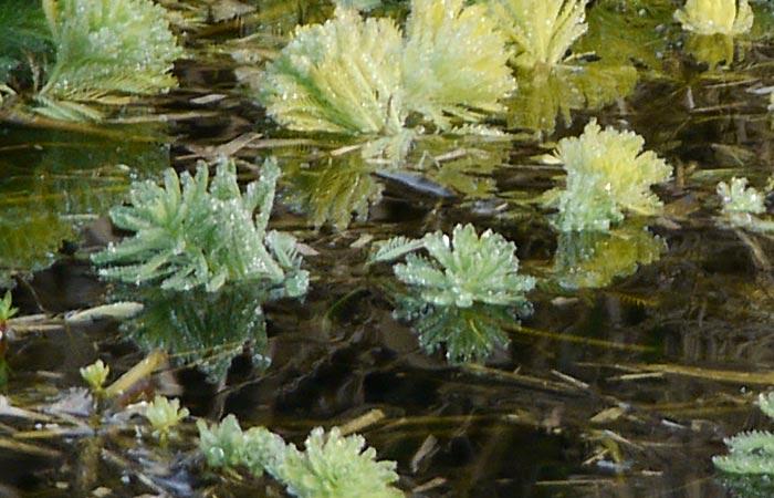 river-oly.jpg