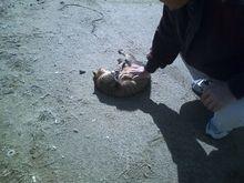 メタボな大熊猫のブログ-CA3B0148.jpg