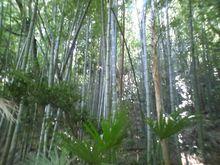 メタボな大熊猫のブログ-CA3B0192.jpg