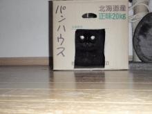 メタボな熊猫(くまねこ)のブログ