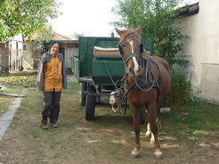 15バートルの引く馬車で散歩_サイズ変更