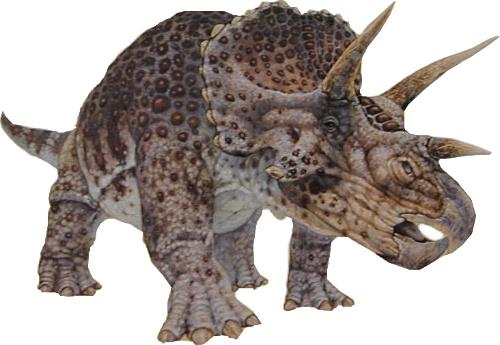 100826largetriceratops.jpg