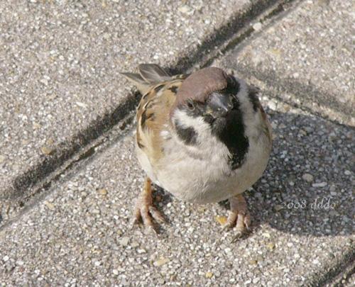 a080212sparrow502c.jpg