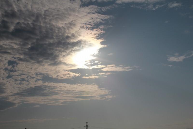 パピヨンの日記_20120521_金環日食_01