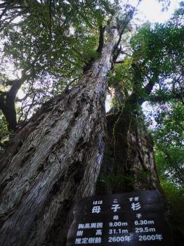 屋久島 541 - コピー