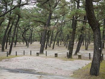 くにの松原キャンプ場 156