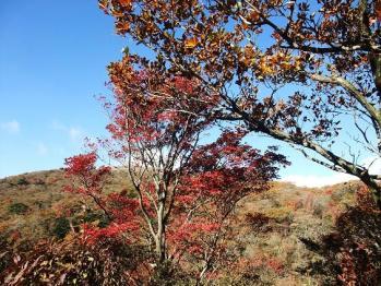 大幡山 091