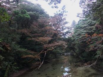 屋久島 014 - コピー
