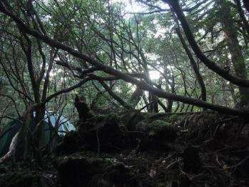 屋久島 091