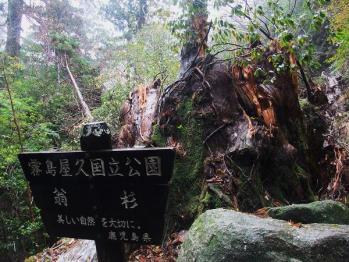 屋久島 120 - コピー