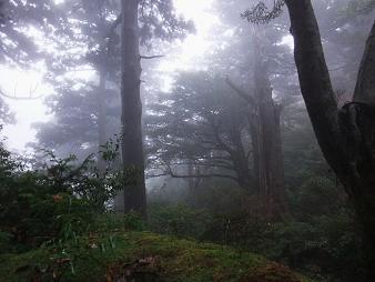 屋久島 145