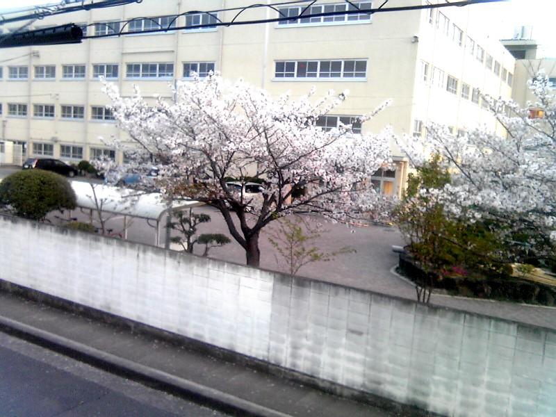 sakura20100410.jpg