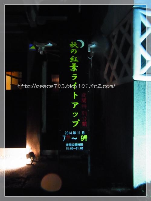 20141108126.jpg