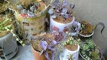 Peeka    boo     zakka-handmade-090318_141116_ed.jpg