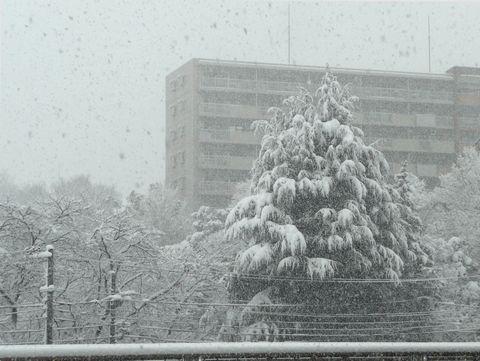 20120229yuki.jpg