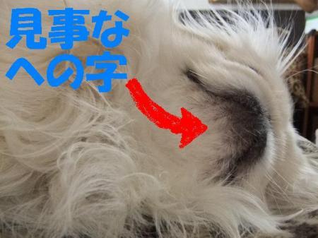 001_convert_20100329072543.jpg