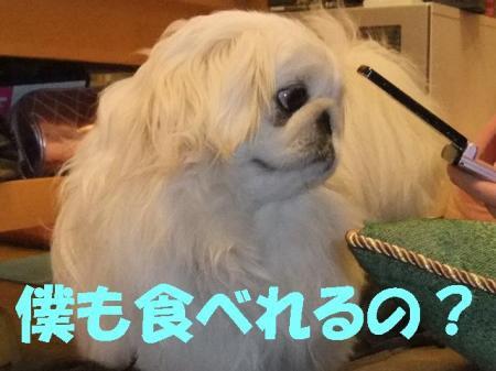 001_convert_20100402111451.jpg