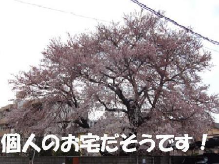 001_convert_20100421115841.jpg