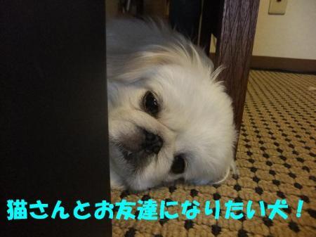 001_convert_20101002235306.jpg