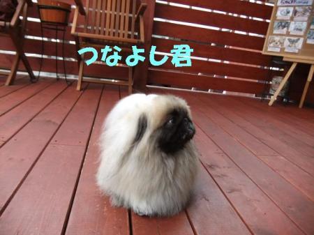 001_convert_20101103165039.jpg