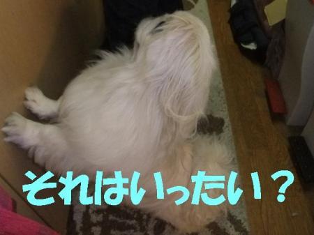 002_convert_20100309084328.jpg