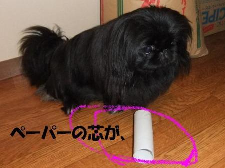 002_convert_20100406080540.jpg