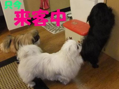 003_convert_20100312082825.jpg