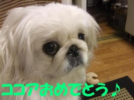 003_convert_20100320080746.jpg