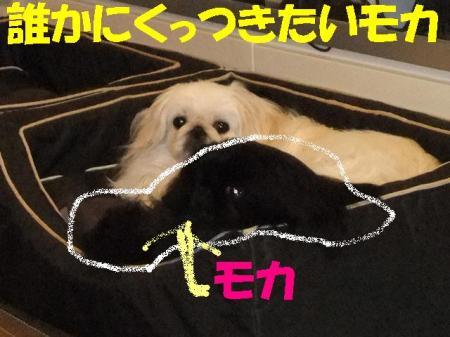 003_convert_20100420144134.jpg