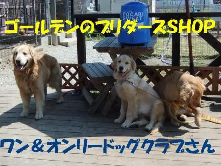 003_convert_20100426135117.jpg